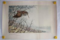 Léon DANCHIN Gravure originale Bécasse en vol