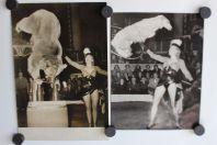 Photo cirque Annie Cordy Ours savant chien