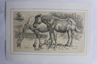 Dessin original au crayon chevaux F. KRAUSS