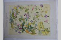 """Estampe """"Etude de Volubilis"""" G. LEBART Art nouveau"""