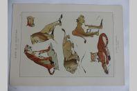 """Estampe """"Etudes d'animaux"""" ROLPH Félins Art nouveau"""